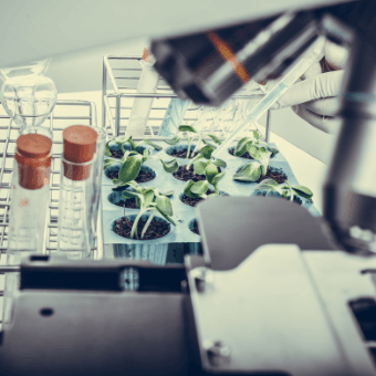 Seed Innovation